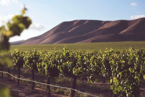 The Wine Valley Best places to visit in Chile
