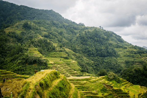Cordilleras' Rice Terraces, places to visit in philippines