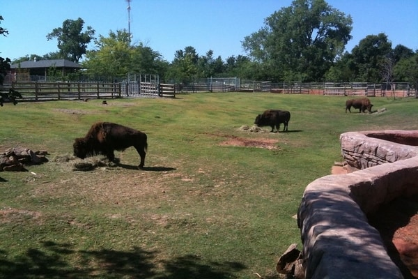 American Wood Bisons, Oklahoma City Zoo, U.S
