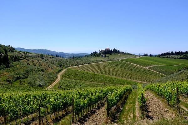 Chianti, half-day wine tour from Florence