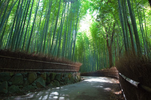 Arashiyama Bamboo Forest, best day trips from Kyoto