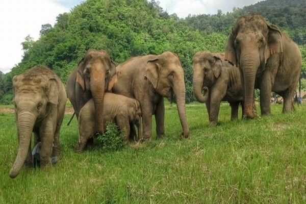 Elephant Nature Park, best day trips from Chiang Mai