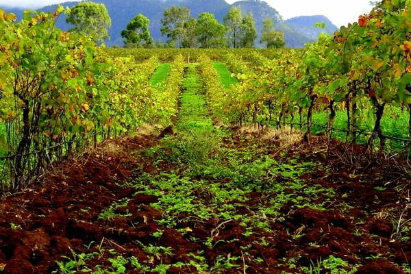 Hunter Valley, best day trips from Sydney