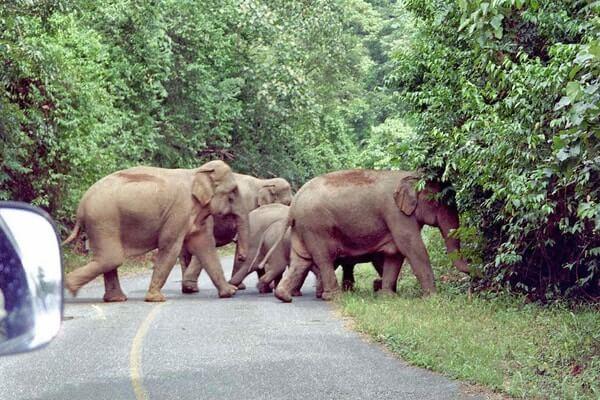 Khao Yai National Park,day trips from Bangkok