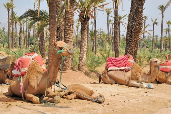 Palm Groves of Marrakech, best day trips from Marrakech, best desert tours marrakech