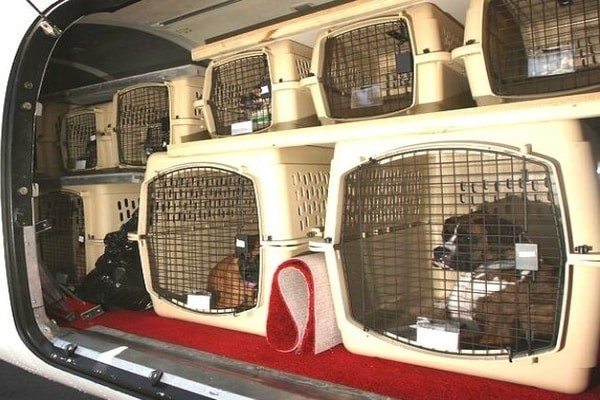 Pet in the hold, Brussels Airlines pet policy