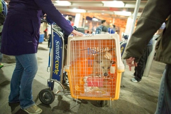 pets at arrival point, Air New Zealand pet policy