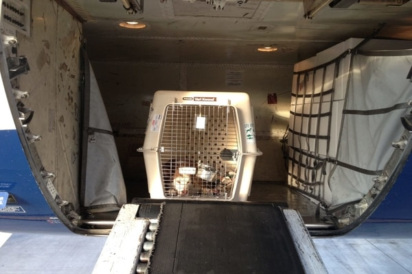pets in cargo hold, Brussels Airlines pet policy