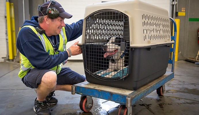 pets in cargo, Air New Zealand Pet Policy
